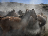 Wild Horses Come to a Halt after Running from a Blm Helicopter