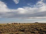 Band of Wild Horses Roam the Wide Open Spaces in Western Wyoming
