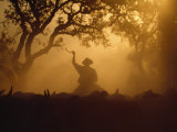Cowboy and Cattle Silhouetted Against the Setting Sun