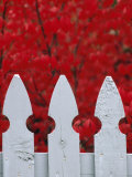 White Picket Fence Against Red Autumn Foliage