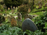 Lush Plants Grow around Old Tombstones in a Graveyard