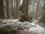 Rare Snow Dusts the Trail Through Del Norte Coast Redwoods Park