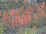 Mountain Forest Displays Fall Colors