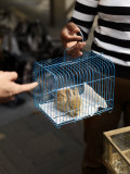 Woman Displays a Rabbit She Is Selling in the Streets of Shanghai