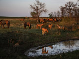 Curious Foals are Drawn to a Water Hole in South Dakota