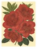Blooming Azalea IV