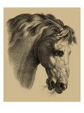 Equestrian Portrait IV