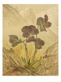 Alpine Florals I