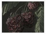 Midnight Raspberries