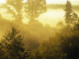 Morning Fog in a Forest Bathed in Sunlight