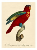 Barraband Parrot No 95