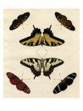 Butterfly Melage II