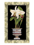 Orchid in Urn I