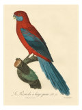 Barraband Parrot No 78