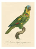 Barraband Parrot No 89