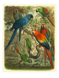 Tropical Birds III