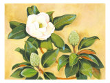 Southern Magnolia II