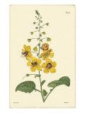 Yellow Curtis Botanical II