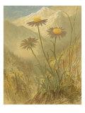 Alpine Florals III