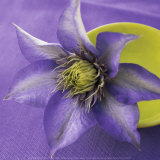 Clematis and Bowl