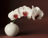 Orchid and white vase