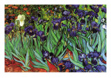 Irises