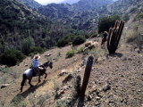 Men on Horseback Carry Supplies to Cattle Ranch on the Outskirts of Santiago  Chile  South America