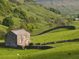 Typical Stone Barns Near Keld in Swaledale  Yorkshire Dales National Park  Yorkshire  England