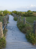 Path to Beach  Sanibel Island  Gulf Coast  Florida  United States of America  North America