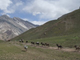 Donkeys Carry Supplies Down Hill  Aconcagua National Park  Argentina  South America