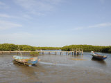 Pirogue (Fishing Boat) on the Mangrove Backwaters of the Sine Saloum Delta  Senegal  West Africa