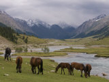 Wild Horses at River  Karkakol  Kyrgyzstan  Central Asia