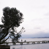 Woman Stands on Dock Next to Pine Tree  Lake Washington  Seattle  Washington State  Usa