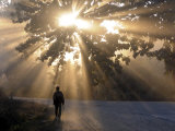 Man Walking Along a Street with Sun Rays Shining Through a Tree  Highlands  Myanmar