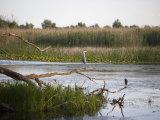Danube River Delta  Romania  Europe