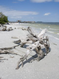 Driftwood on Beach with Fishing Pier in Background  Sanibel Island  Gulf Coast  Florida