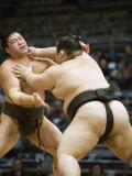 Fukuoka Sumo Competition  Kyushu Basho  Fukuoka City  Kyushu  Japan  Asia