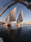 Feluccas Sailing on the River Nile Near Aswan  Egypt  North Africa  Africa