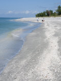 Beach Covered in Shells  Captiva Island  Gulf Coast  Florida  United States of America