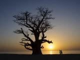Baobab Tree and Couple Walking  Sine Saloum Delta  Senegal  West Africa  Africa