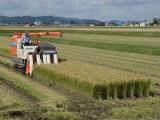 Rice Harvest with Mini-Combine-Harvester  Furano Valley  Central Hokkaido  Japan  Asia