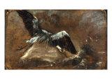 Study of a Heron (Verso)