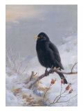 In Winter&#39;s Grasp - Blackbird  1921