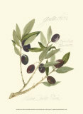 Gaeta Olives
