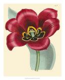 Elegant Tulips IV