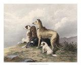 Highland Dogs
