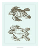Loggerhead Turtles II