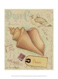 Postcard Shells III