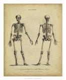 Anatomy Study I