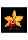 Vivid Orchid VI
